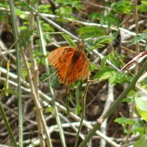 One of many butterflies encountered on our hike