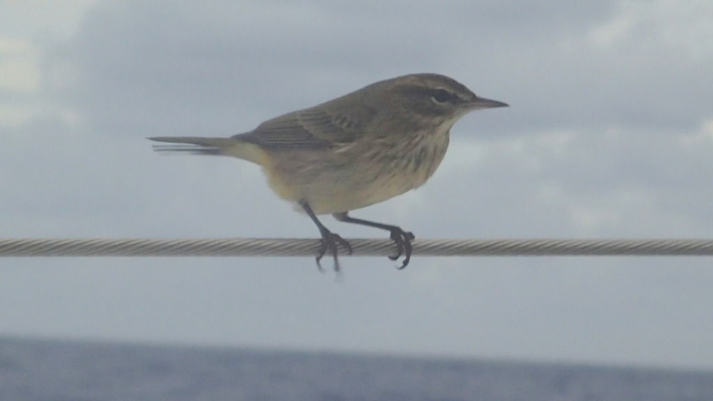 A small bird took a breather on the lifeline 400 miles from the nearest land