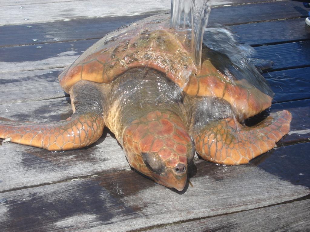 Keeping turtle wet